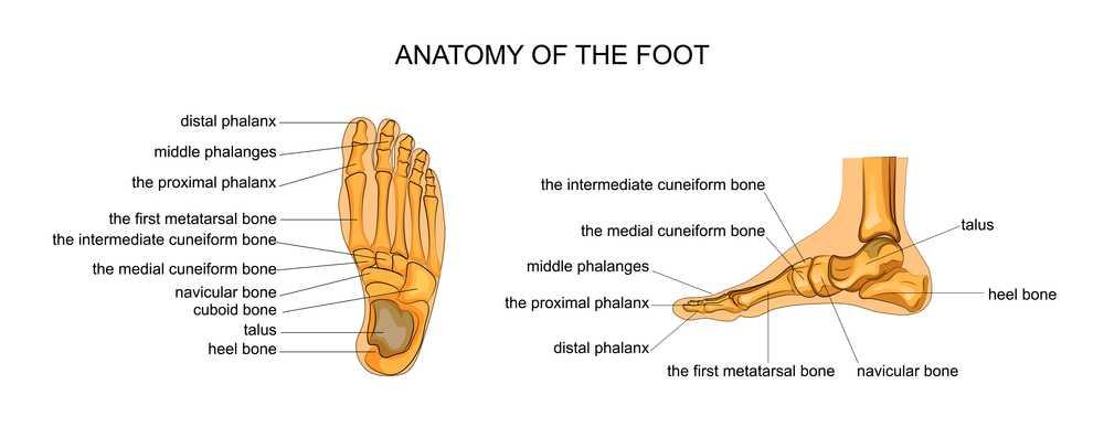 best walking sneakers for heel pain